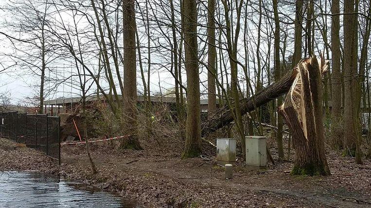 De stormschade in de bossen van het provinciaal domein van Puyenbroeck is groot.