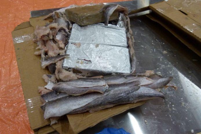 De cocaïne zat verstopt tussen een lading bevroren vis.