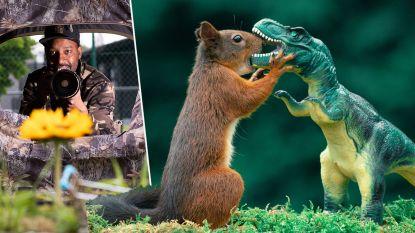 In gevecht met een dino of op pad met een winkelkarretje: Diepenbekenaar neemt speelse foto's van eekhoorns in eigen achtertuin