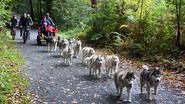 Stan met hondenslee door het bos