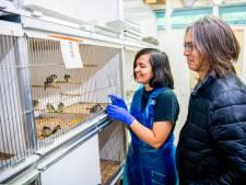 Zo zorgt corona voor piek van jonge vogels bij de vogelopvang in Rotterdam