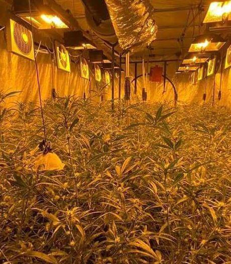 Grote ondergrondse wietkwekerij met 1200 planten opgerold