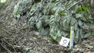 Actiegroep ongerust over blootliggend asbest op stort aan Bosstraat