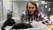 Asiel Catpower in oude gebouwen Electrabel: tijdelijke thuis voor 70 katjes