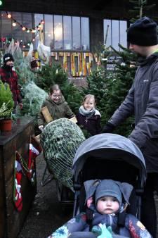 Koreaanse zilverspar of fijnspar: Verkopers kerstbomen weer vol aan de bak