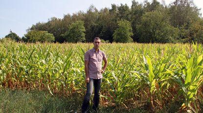 Tachtig procent maïs en witloof verloren door de hitte