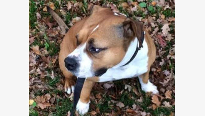 Ziggy is een van de vermiste honden