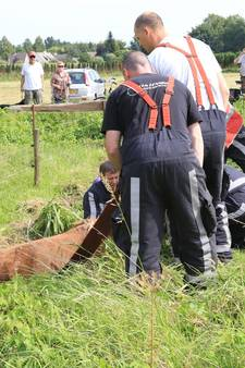 Brandweer bevrijdt in sloot gevallen pony in Aarle-Rixtel