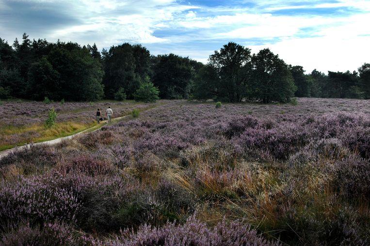 Recreatie in natuurgebied de Meinweg bij Ospel in Limburg.  Beeld Hollandse Hoogte /  ANP