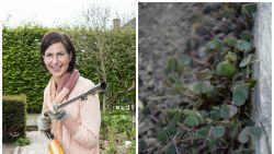 Ten oorlog tegen onkruid: tuinexperte Laurence Machiels legt uit hoe je dat best aanpakt