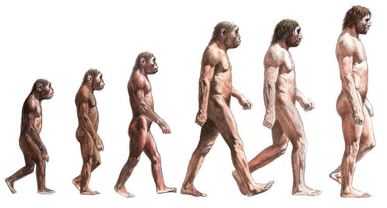 de mens als hoogtepunt van de evolutie? achterhaald idee | de morgen