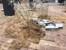 Ruilen? Een tuintegel voor een gratis plant