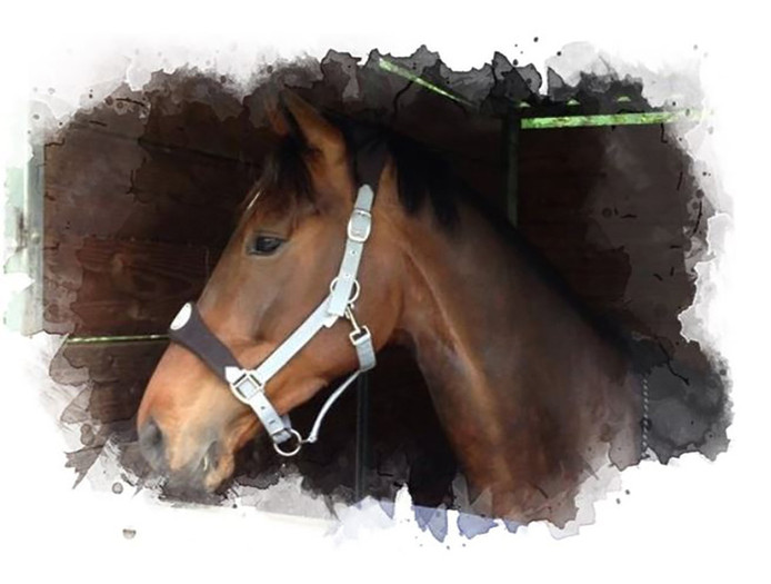 Paard Essie.