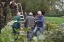 Met een groep van dertig vrijwilligers werden de wilgen aan het Waspikse Spoorpad gesnoeid.