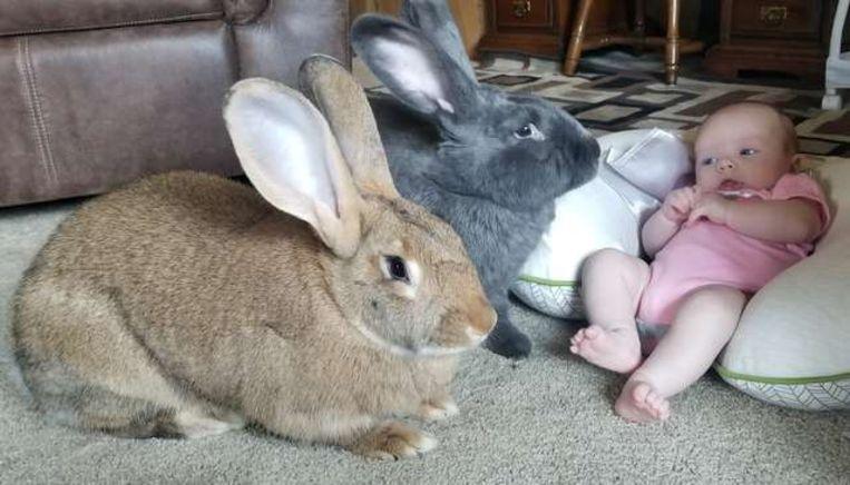 Alfie en Amelia zijn dol op baby Bailey en verliezen haar geen minuut uit het oog.