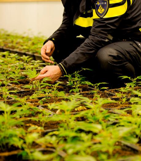 Meeste hennepkwekerijen opgerold in Oost-Nederland, totaal daalt flink