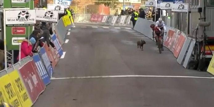 Un chien perturbe une course cycliste en Belgique.