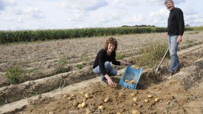 Boerderij Fets lanceert eerste 'zelfraapdag' op 100ste verjaardag: Kom zelf je aardappelen rapen en betaal slechts helft van de prijs