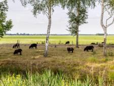 Buurt zonnepark Eeserwold voelt zich voorgelogen: 'Dit is niet waarom we naar Steenwijk zijn verhuisd'