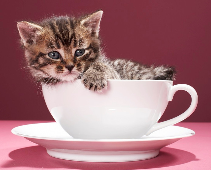 Kattencafé