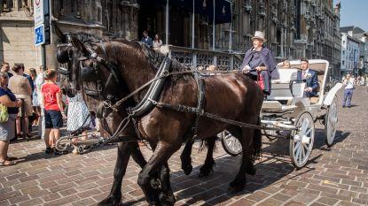 """Toelating van politie nergens voor nodig: """"Paardenkoetsen mogen in de stad rijden, zonder vergunning"""""""
