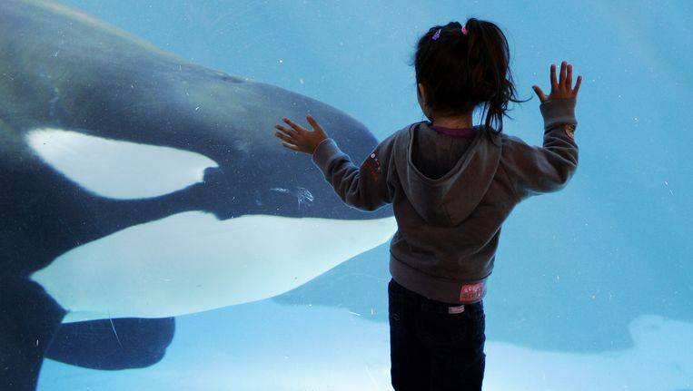 Een bezoekster van SeaWorld in Californië. Beeld ap