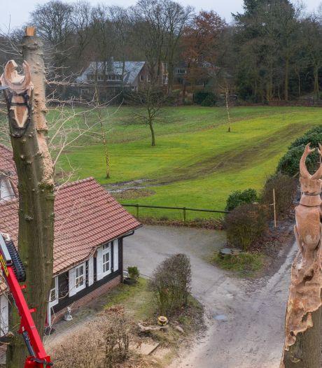 Indrukwekkend: hoe Sander Boom van deze oude boom in Vierhouten een vliegend hert maakt
