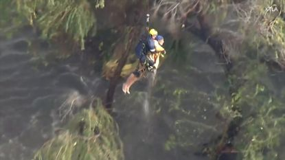 Spectaculaire redding tijdens overstromingen Californië: man vastgeklampt aan boom uit rivier gehaald door helikoptercrew