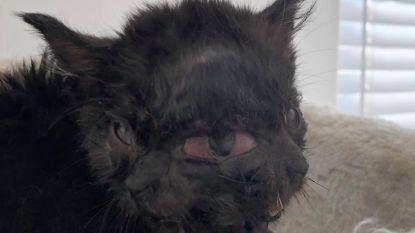 Katje met twee gezichten dat verstoten werd door moeder vindt nieuwe thuis bij dierenarts