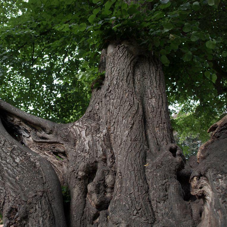 Nederland, Hilvarenbeek, 29 juni 2017. Lindeboom met standbeeld van Anton van Duinkerken. Foto: Werry Crone Beeld Werry Crone