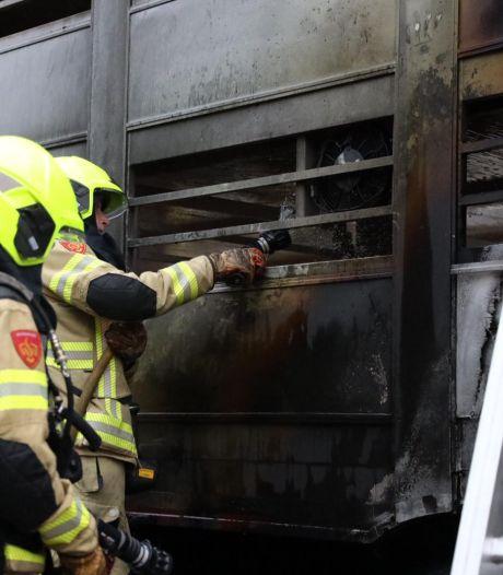 Varkens dood bij brand in vrachtwagen op A50 bij Heelsum