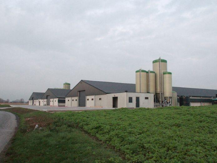 Vogelgriep vastgesteld bij pluimveebedrijf De Brugpoort in Menen