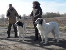 Jongen rijdt expres tegen zorghond aan