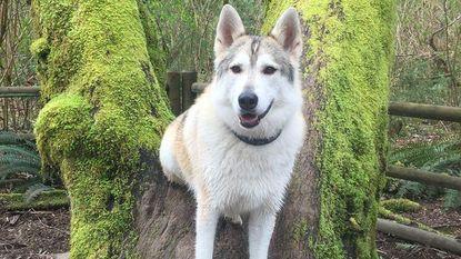 """Vrouw ziet hoe therapiehond wordt doodgeschoten door jager: """"Ze keek naar mij met een duidelijk gevoel van verraad"""""""