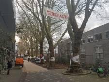 Den Bosch en bewoners zoeken mogelijkheden om bomen aan Boschveldweg te behouden