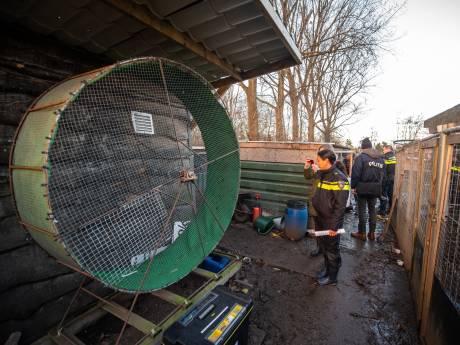 Hanengevechten in Bodegraven: 'Nog nooit eerder onderwerp van politieonderzoek'