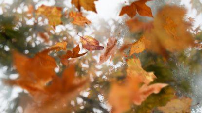 Zacht weer op komst: donderdag mogelijk 16 graden