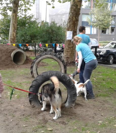 Saai uitlaatveld verandert in uitdagende hondenspeeltuin in Vlijmen