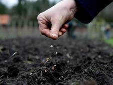 Buren verbiedt chemische middelen in volkstuinen