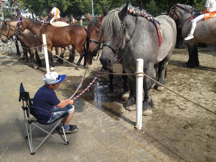 Oppassen op de paarden.