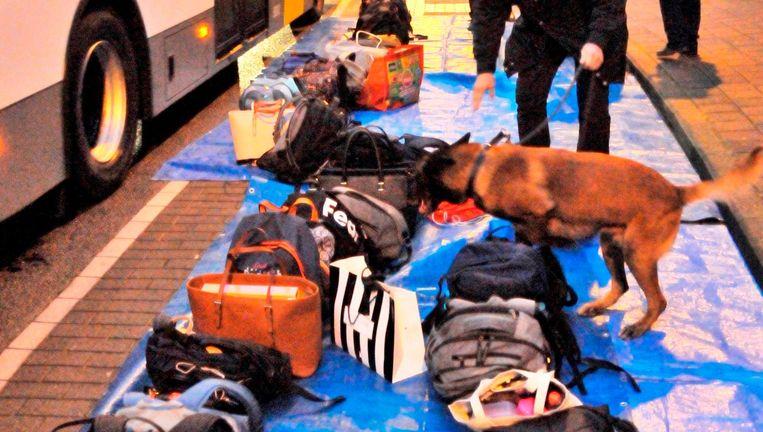 Een drugshond snuffelt tussen de rugzakken en handtassen.