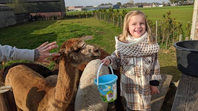 """Collette vzw gaat samenwerken met alpacaboerderij: """"Een ontmoeting met deze dieren prikkelt de zintuigen"""""""