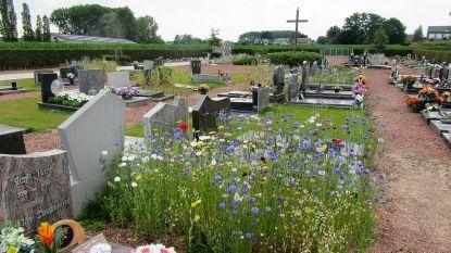 Begraafplaatsen in Asse zien er stilaan groener uit (en dat is een bewuste keuze van het gemeentebestuur)