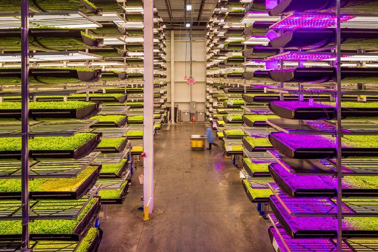 AeroFarms in de VS, een verticale boerderij van 6.500 m² waar jaarlijks bijna een miljoen kilo groente wordt geproduceerd. Beeld