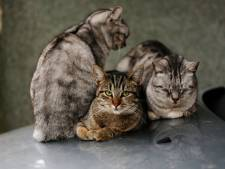 'Huisarrest voor katten is helemaal niet zo'n gek idee'