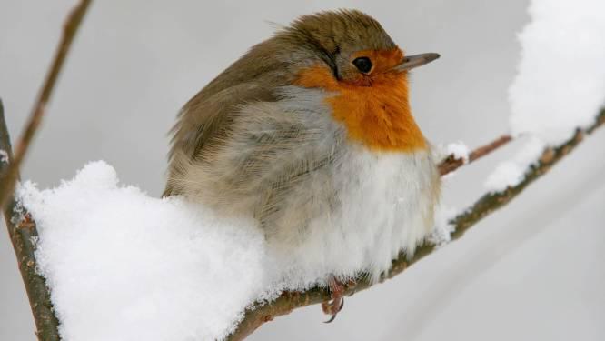 Gratis voederbakjes voor vogels in Brakel (als er voldoende interesse is)