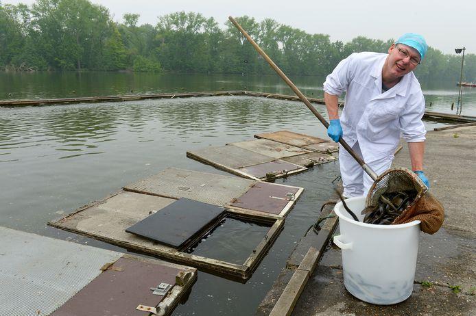 Frans Borremans haalt paling uit het Donkmeer: na meer dan vijftig jaar komt eind 2021 een einde aan die traditie.