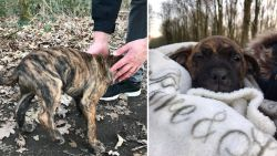 """Puppies achtergelaten in vrieskou in Harelbeke: """"Breng ze naar asiel in plaats van ze te dumpen"""""""