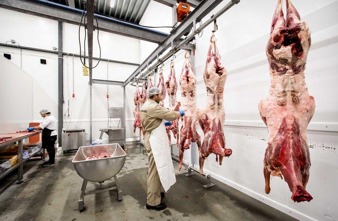 Afgeschoten herten van Oostvaardersplassen hangen in een koelcel.