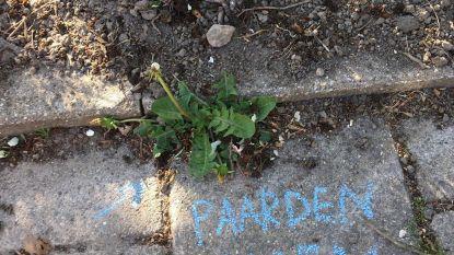 Check je stoep: dankzij #botanischstoepkrijten wordt onkruid opeens hip